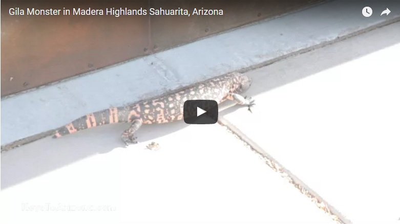 Friendly encounter with Gila Monster | Madera Highlands Sahuarita, Arizona